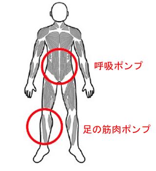 下肢静脈瘤悪化予防:運動編